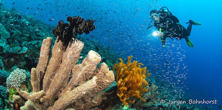 Unterwasserlandschaft |Indonesien, Tauch Club Maritim e.V.