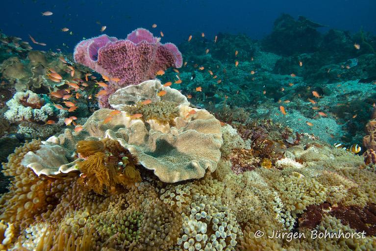 Unterwasserwelt II |Indonesien, Tauch Club Maritim e.V.
