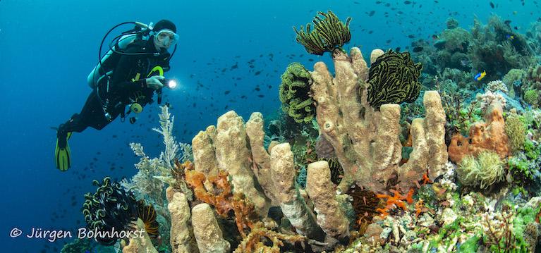 Unterwasserwelt |Indonesien, Tauch Club Maritim e.V.